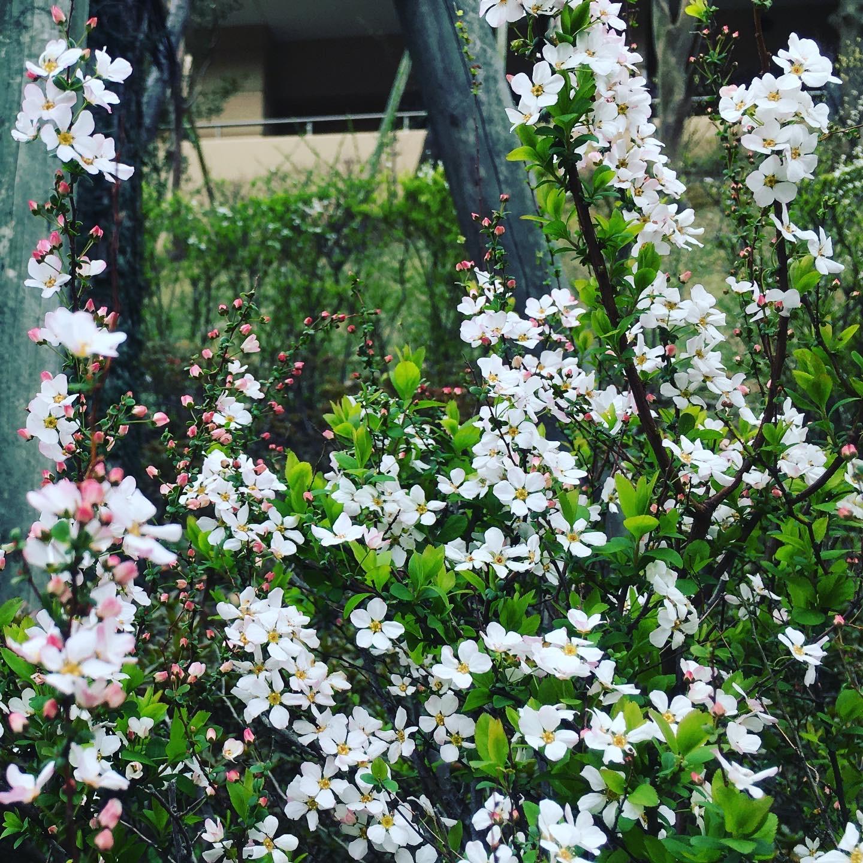 Spring has come !!